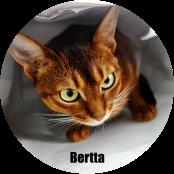Banner-Bertta_uusi_crop