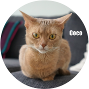 Banner-Coco_uusi